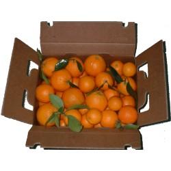 Naranjas sin seleccionar tamaños