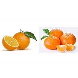 Mixta 10 Kg de naranjas de mesa mas 5 Kg de mandarinas.